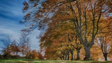 Photo of تعرف على أجمل النزهات الخريفية في بريطانيا