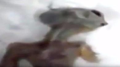 Photo of بالفيديو: روسي يعثر على جثة كائن فضائي تحت الثلوج