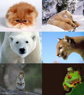 تفسير و دلالة الحيوانات في المنام