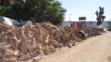 """Photo of """"البيئة"""" لإمارات المناطق: اتخذوا كافة الإجراءات للحد من ظاهرة الاحتطاب"""