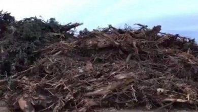 Photo of 50 ألف ريال وزراعة 60 شجرة عقوبة مقاول قطع أشجاراً بعسير