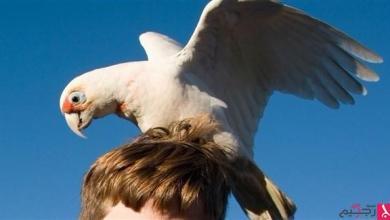"Photo of ""طيور الدمار الشامل"" تثير الذعر في أستراليا"