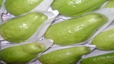 Photo of حظر استيراد الجوافة من مصر