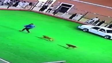 Photo of كلب يهاجم مدربا بالجمارك خلال عرض بالجنادرية (فيديو)