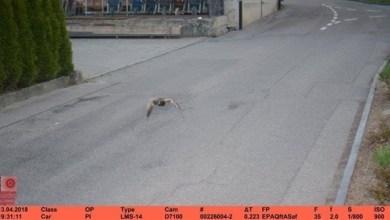 Photo of سويسرا: تغريم بطة بعد مخالفتي سرعة تجاوزت فيهما 20 كيلومتراً في الساعة