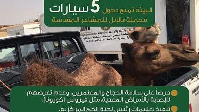 "Photo of ""البيئة"" تمنع 5 سيارات نقل محملة بالإبل من دخول المشاعر المقدسة"