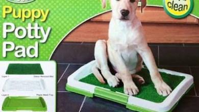 Photo of تدريب الكلاب على الحمام بطرق بسيطة وسهلة