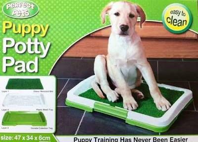 تدريب الكلاب على الحمام بطرق بسيطة وسهلة