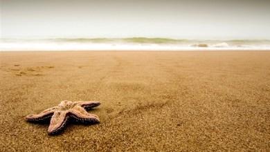 Photo of تفسير حلم رؤية الرمال على الشاطئ