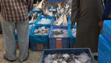 Photo of مصادرة محاصيل زراعية وأسماك فاسدة في أسواق السيح