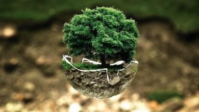 Photo of بولندا تدعو لزراعة غابات في أنحاء العالم لتحسين امتصاص انبعاثات الكربون
