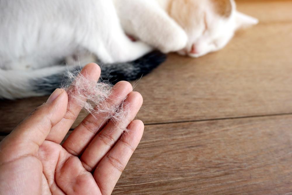 الامراض الجلدية لدى القطط