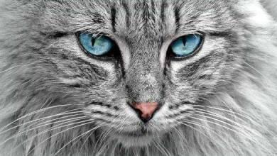 Photo of معلومات تفيدك عن القطط
