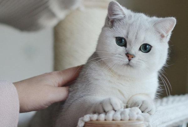 معلومات مفيدة عن القطط