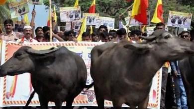 Photo of الهند: مقتل شخصين في احتجاجات عنيفة على ذبح بقرة
