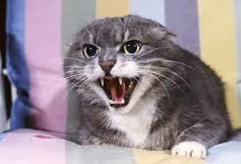 Photo of عدوانية القطط