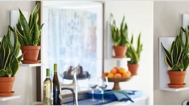 Photo of 10 أفكار لدمج النباتات مع ديكور المطبخ