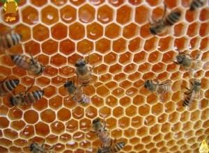 Photo of أنواع وفوائد العسل