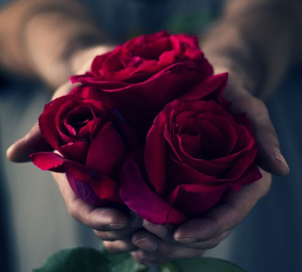 صور وردة حمراء رومانسية