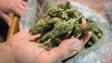 Photo of ضبط 4 كيلو من الماريجوانا في حقيبة مسافر بمطار دبي