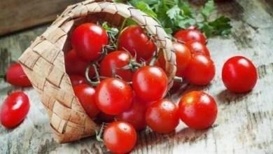 Photo of تناول الطماطم لتحمي نفسك من سرطان الكبد