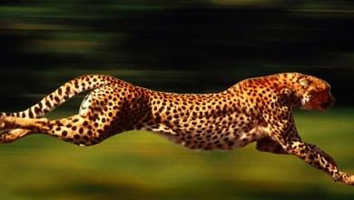 Photo of أسرع 10 حيوانات في العالم , ما هو اسرع حيوان