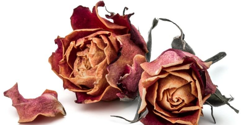 فوائد الورد المجفف للجسم