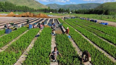 Photo of حكم عن الزراعة