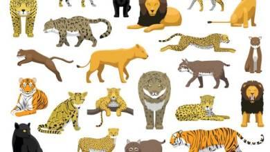 Photo of معلومات عن حيوانات مفترسة