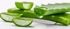 الالوفيرا لعلاج الشعر الدهني