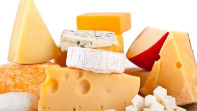 Photo of الفرق بين اللبنة والجبنة