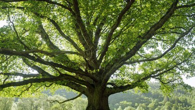 Photo of ما أهمية الاشجار ؟