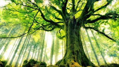 Photo of ماهي الشجرة ؟