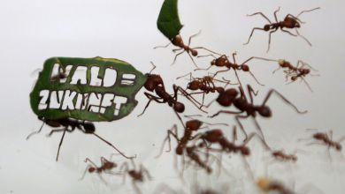 Photo of معلومات عن النمل