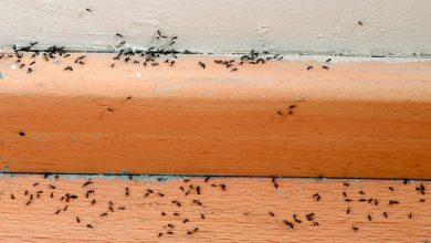 Photo of كيفية التخلص من النمل في منزلك