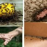كيفية التخلص من النمل الأسود