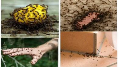 Photo of كيفية التخلص من النمل الأسود