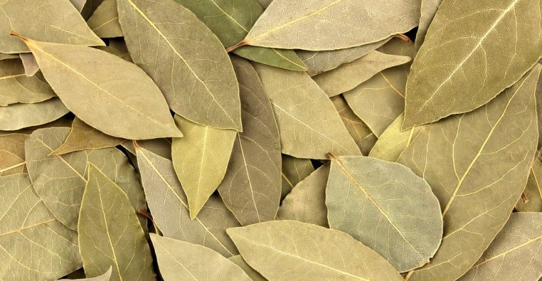 Photo of نبات الرند وفوائده