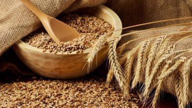 Photo of كيفية زراعة القمح