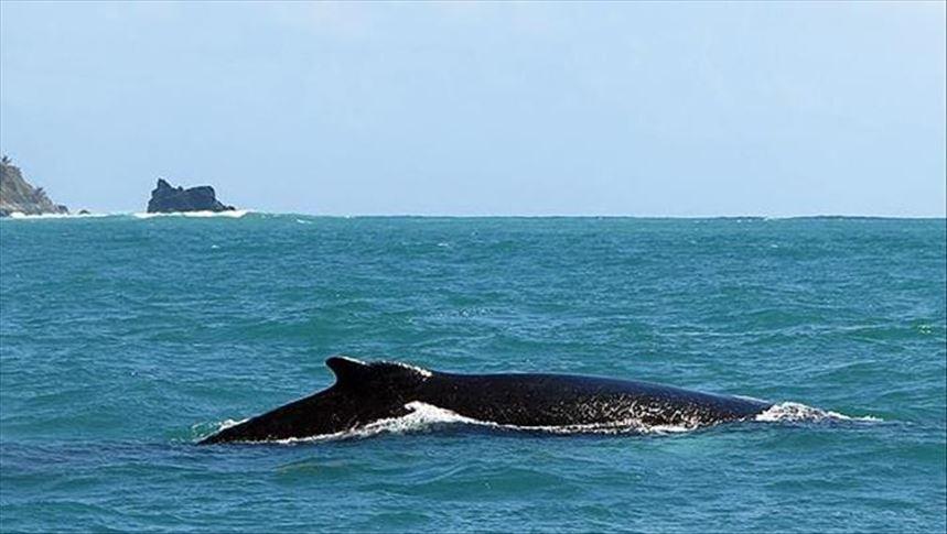 أشهر أنواع الحيتان بالصور