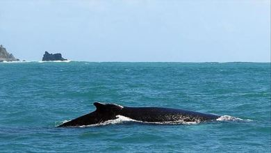Photo of أشهر أنواع الحيتان بالصور