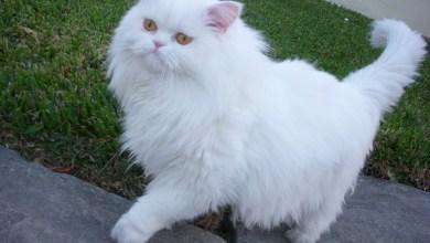 Photo of أنواع القطط