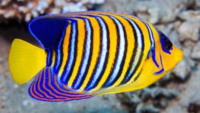 Photo of تعرف على أشهر أنواع سمك الزينة