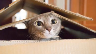 Photo of كيفية اقناع الوالدين بشراء القطط