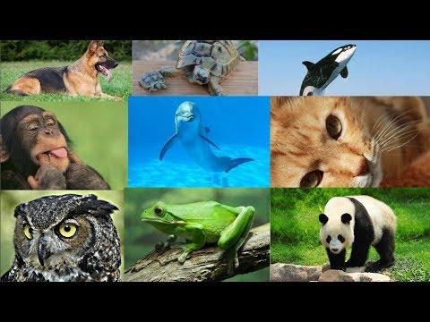 تعرف علي شخصيتك من خلال حيوانك المفضل