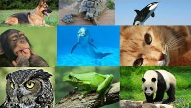 Photo of تعرف علي شخصيتك من خلال حيوانك المفضل