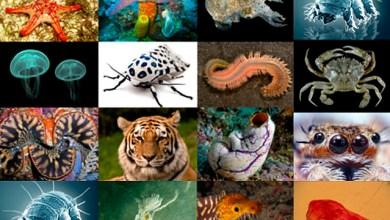 Photo of ما هو سلوك الحيوانات ؟