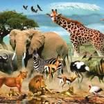 أسماء جميع الحيوانات