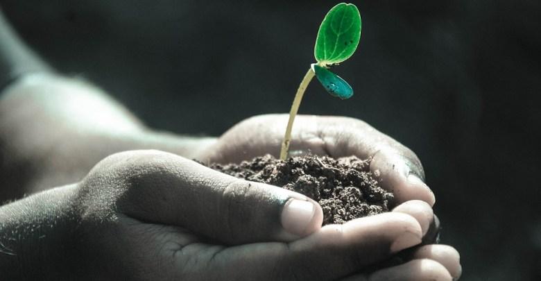 Photo of نمو النباتات ومراحل تطورها