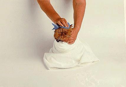 صور طريقة استحمام القطط 5
